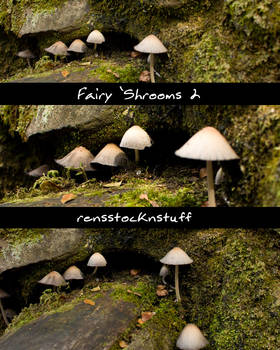 Fairy 'Shrooms 2