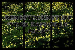 York Daffodils Pack