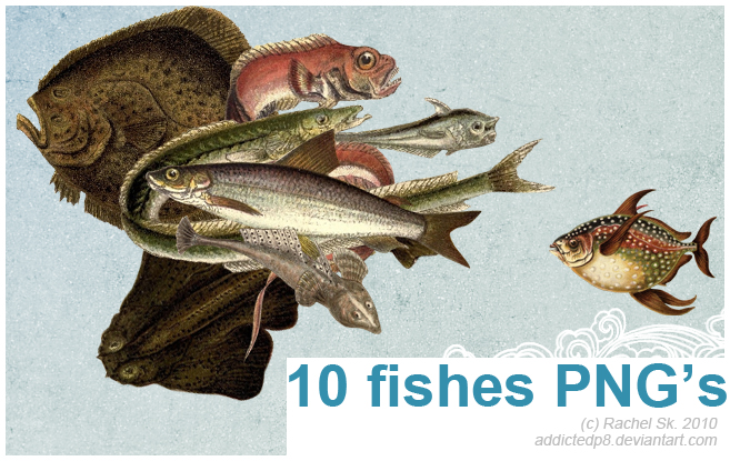 10 fishes PNG