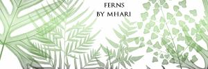Ferns by mhari