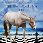 BP Blessed Lucky Iron EEE Stallion