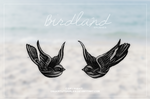 Birdland {brushes}
