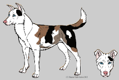Canine Color Genetics - Final by Xenothere