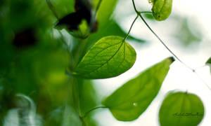 Leaf Wallpaper.