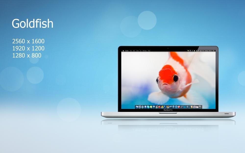 Goldfish by felixufpe
