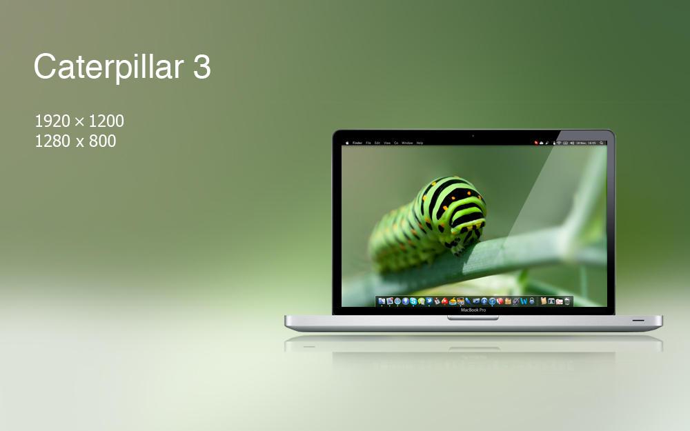Caterpillar 3 by felixufpe