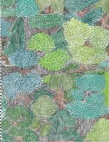 Crisp Woods by tijodaslim