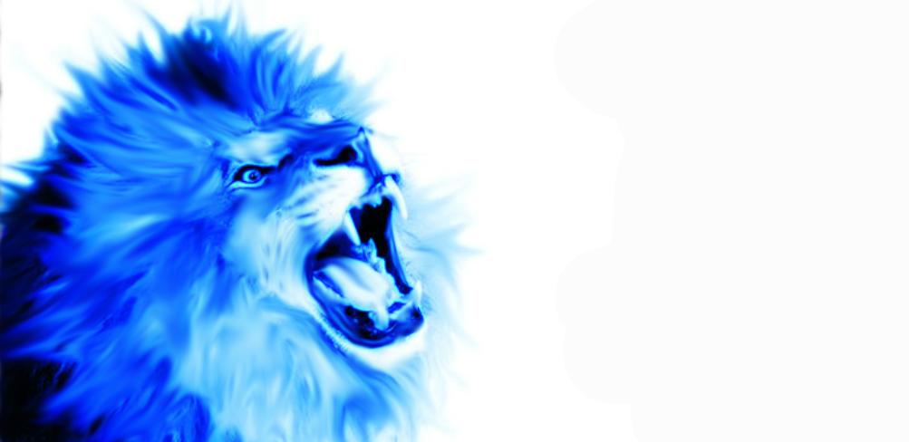Lion Wallpaper By Tobukujira On Deviantart