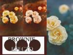 Brownie(efecto en PXD)