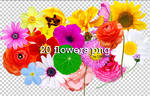 Flowers png +