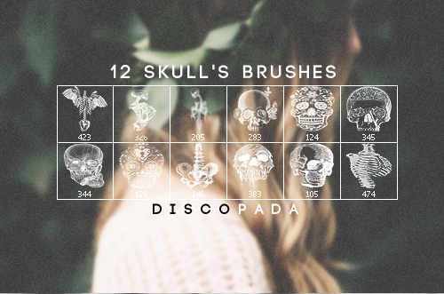 12 Skulls and Anatomy Brushes by Discopada