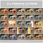 All premium Actions and PSD (50% off)
