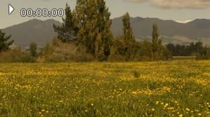 flowerpanorama