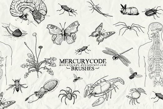 Brushset 03: biology