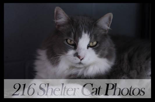 Shelter Cat Stock