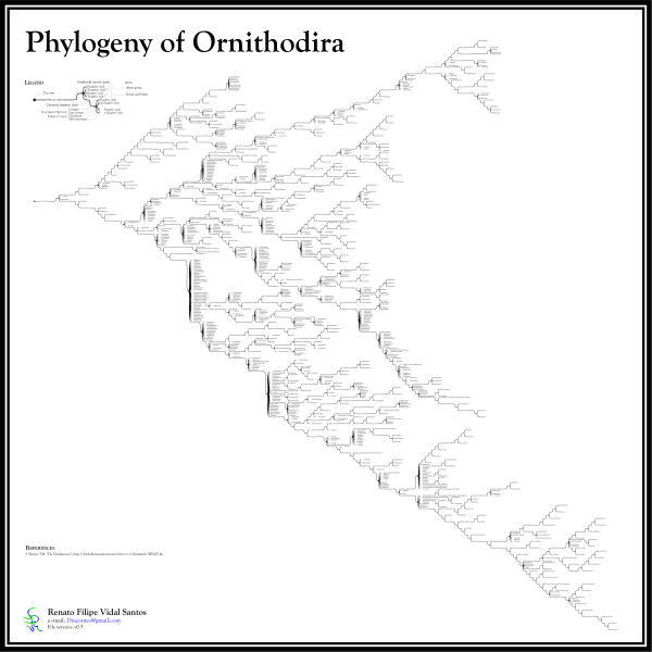 Ornithodiran Phylogenetic Tree by dracontes