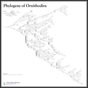 Ornithodiran Phylogenetic Tree