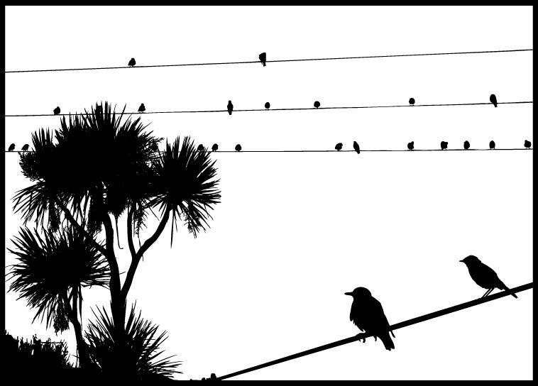 Vector Birds by arwenita