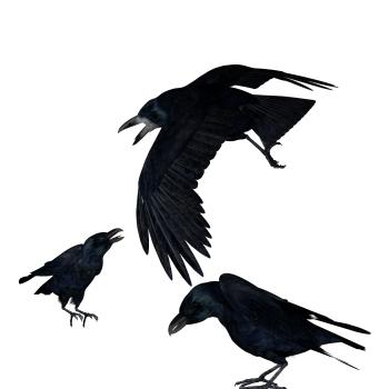 Raven by Amicizia-Sowe