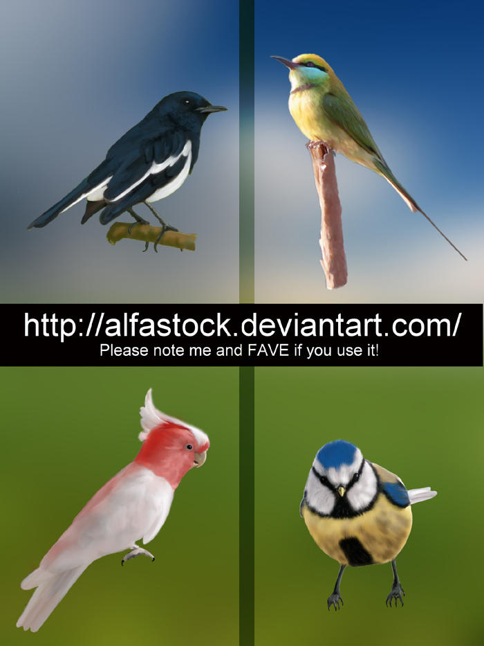 Pack de 4 Aves pintadas. HD Painted_Birds_Pack_by_alfastock