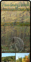 Forest Backgrounds Zip Pack 3 by FantasyStock