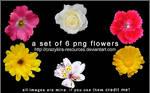 flower renders01