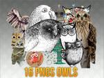 16 ong owl