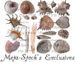 Exclusive Shell PNG's by Meta-Stock