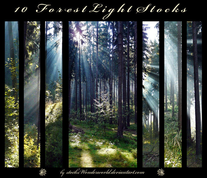 Forest Lights by stocksWonderworld