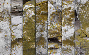 Stone Moss Texture Pack by sdwhaven