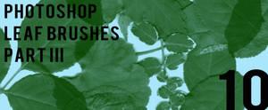 Photoshop Leaf Brushes Pt III