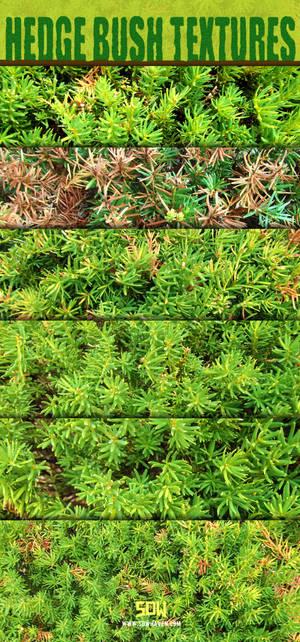 Hedge Bushes Textures