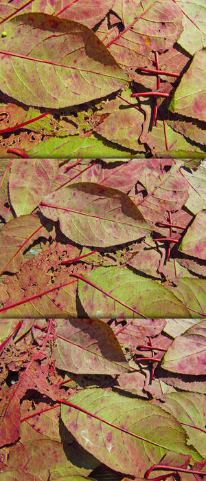 High Res Stained Leaf Textures