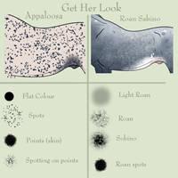 Get Her Look: Appaloosa and Roan Sabino by EdithSparrow