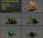 Free 3D plants textures 01