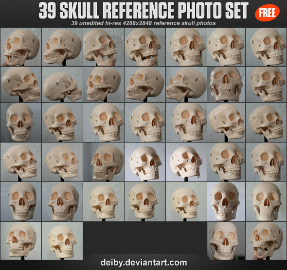 39 Skull Reference Photo Set by deiby