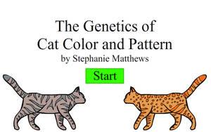 Create-A-Cat