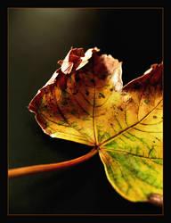 Autumnial view