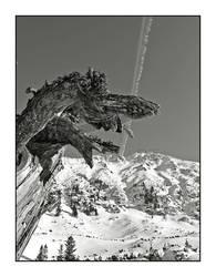 Dragon of the mountain