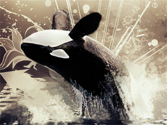 Orca by Silver-Noctis