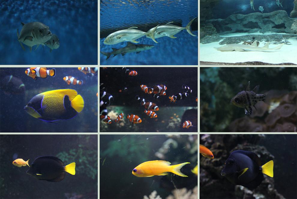 Blue Planet - Fish 4
