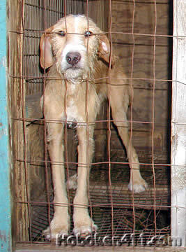 animal cruelty facts