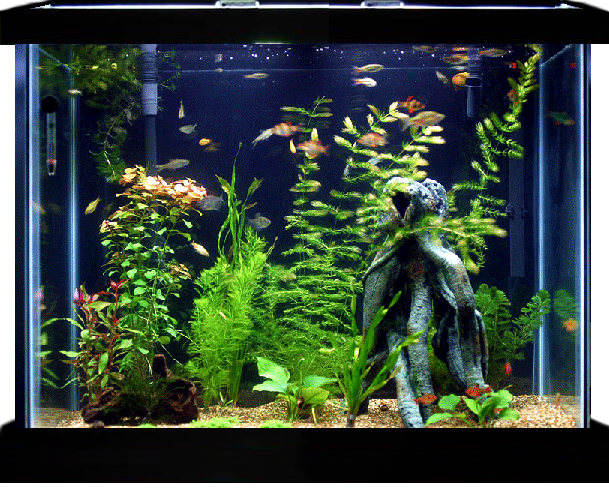 Animated Aquarium Updated For Xwidget By Jimking On