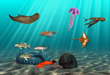 Sea Life 3 for xwidget (full animated) by Jimking