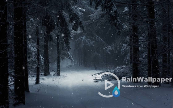 Winter Snow Forest by Jimking