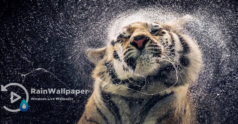 Wet Tiger Shake by Jimking