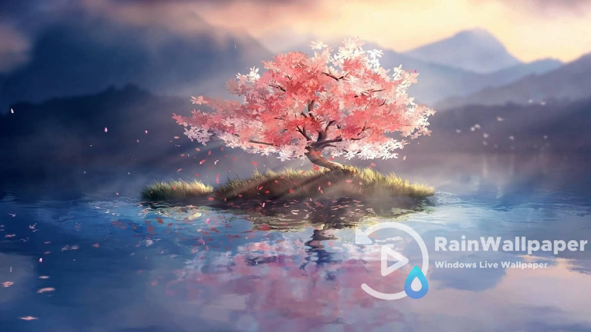 Lone Cherry Blossom By Jimking On Deviantart