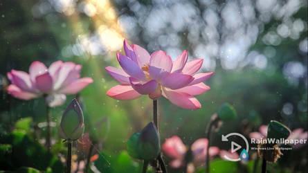 Lotus by Jimking