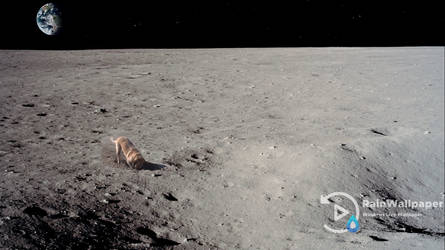 Dog on the Moon by Jimking