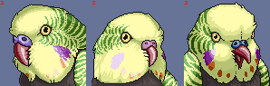 Free Budgie Portraits by FerianMoon